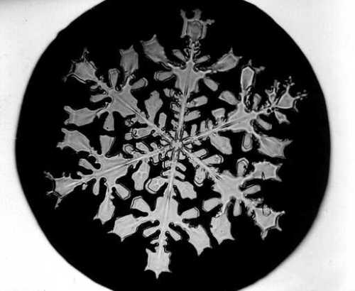 Bentley_Snowflake3
